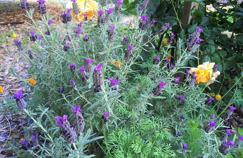 צמחי מרפא בהתאמה אישית